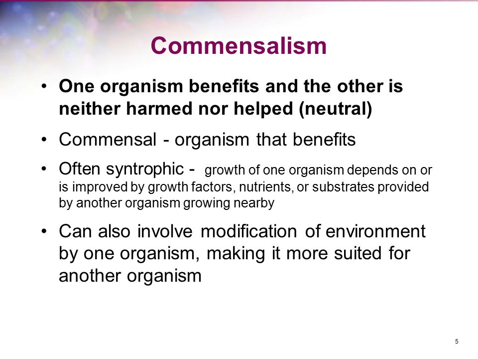 Commensalism One organism benefits and the other is neither harmed nor helped (neutral) Commensal - organism that benefits.