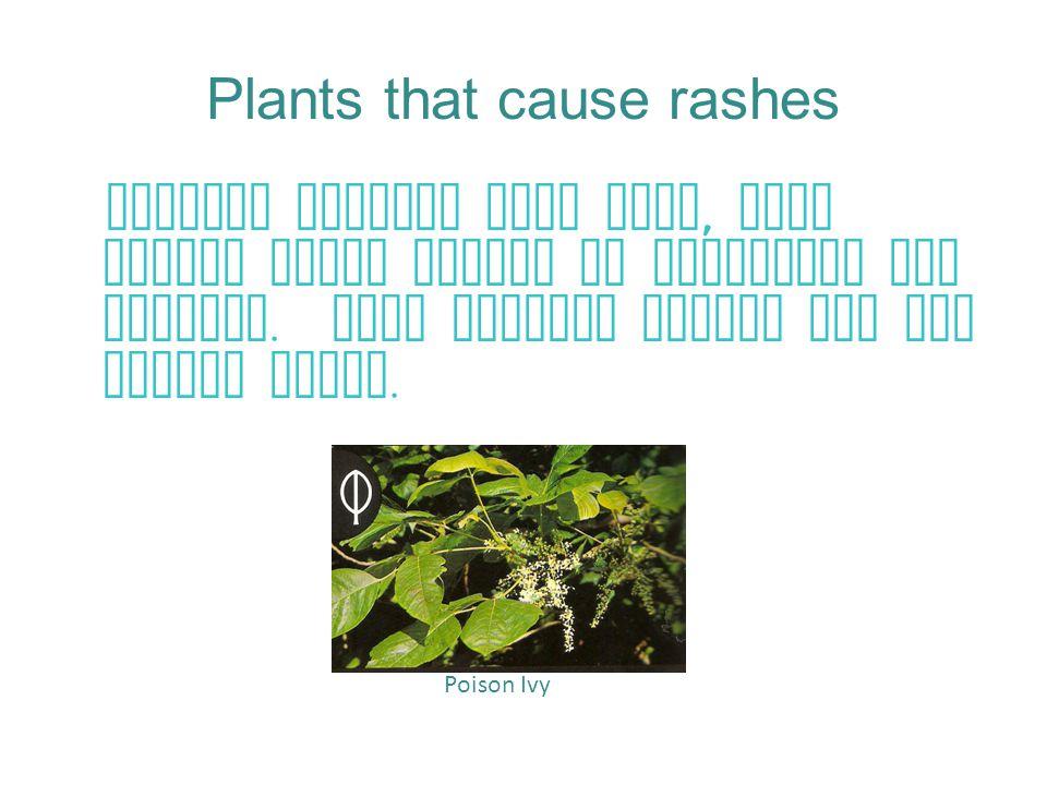 Plants that cause rashes