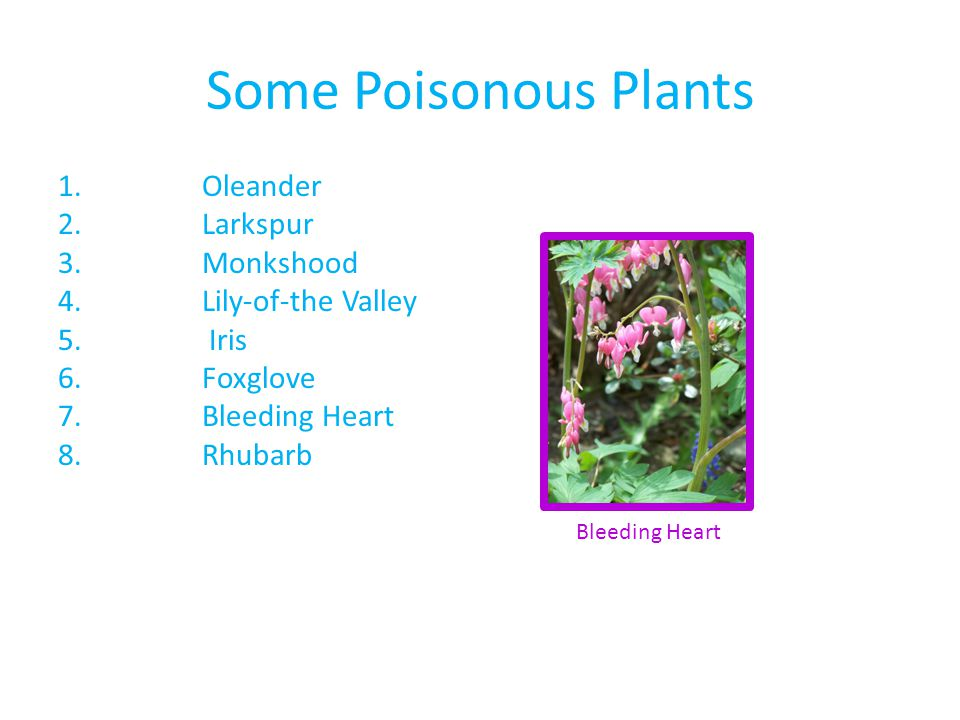 Some Poisonous Plants Oleander Larkspur Monkshood Lily-of-the Valley