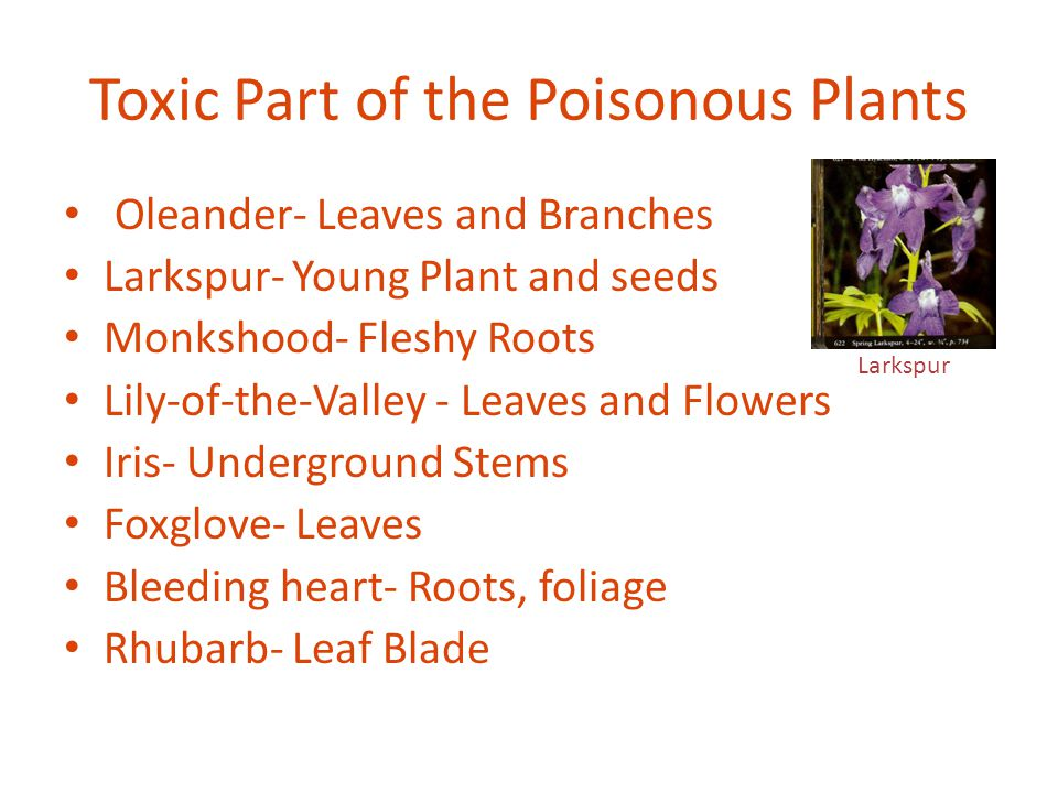Toxic Part of the Poisonous Plants