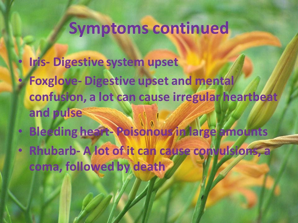 Symptoms continued Iris- Digestive system upset