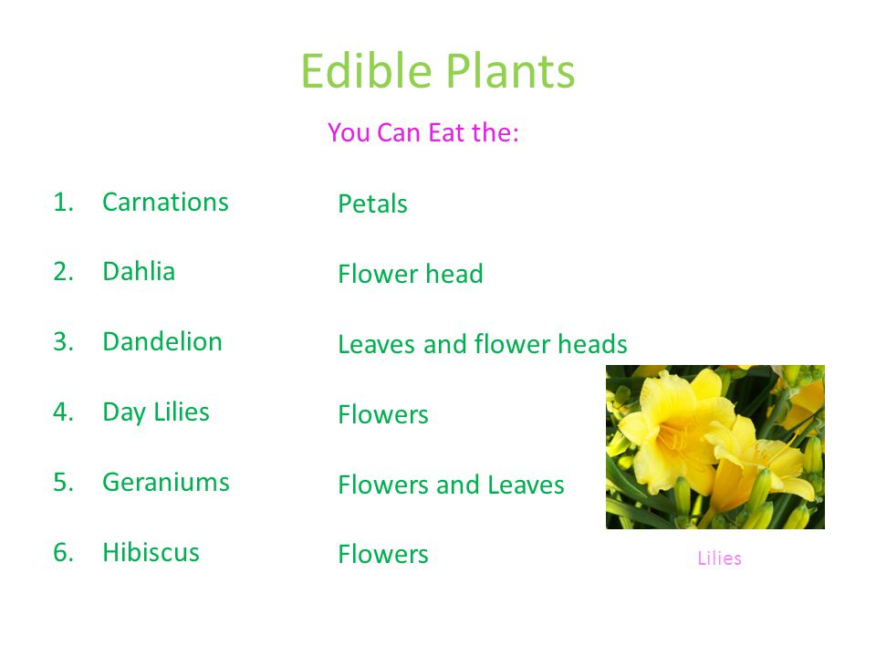 Edible Plants You Can Eat the: Carnations