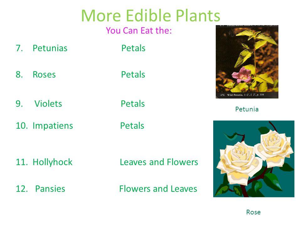 More Edible Plants You Can Eat the: Petunias Petals Roses Petals