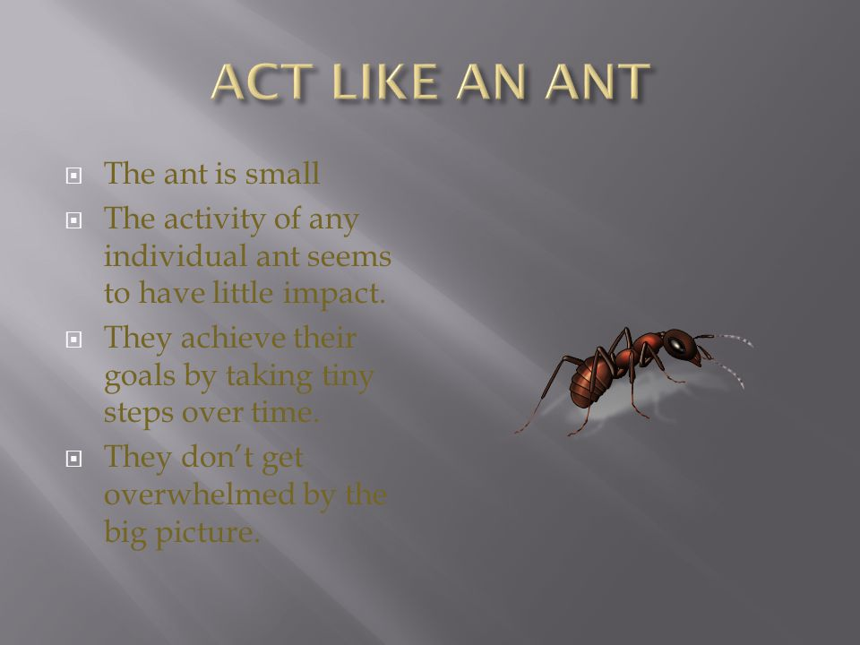 ACT LIKE AN ANT The ant is small