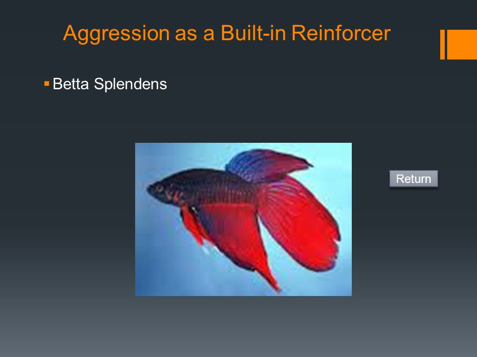 Aggression as a Built-in Reinforcer
