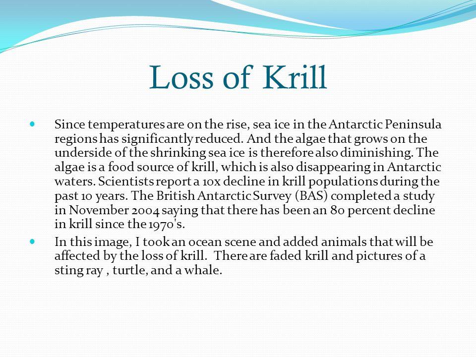 Loss of Krill