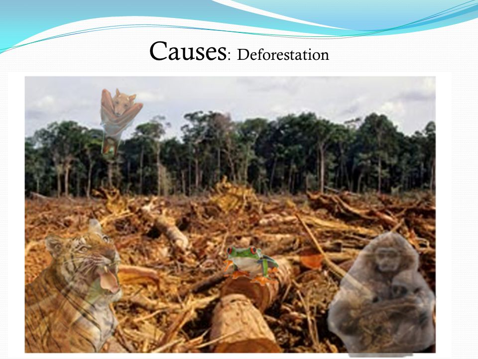 Causes: Deforestation