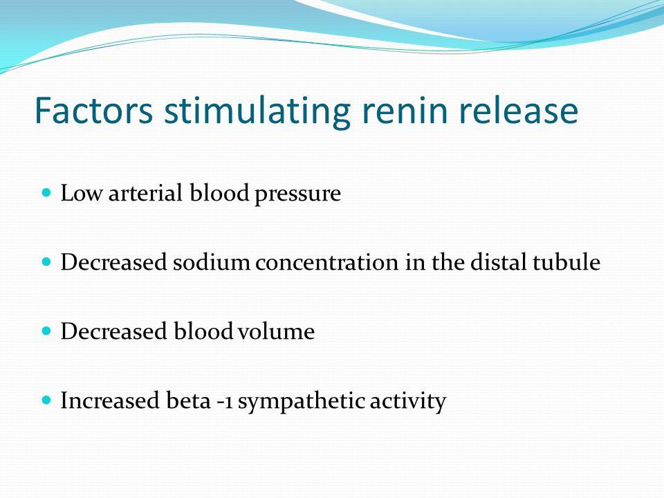 Factors stimulating renin release