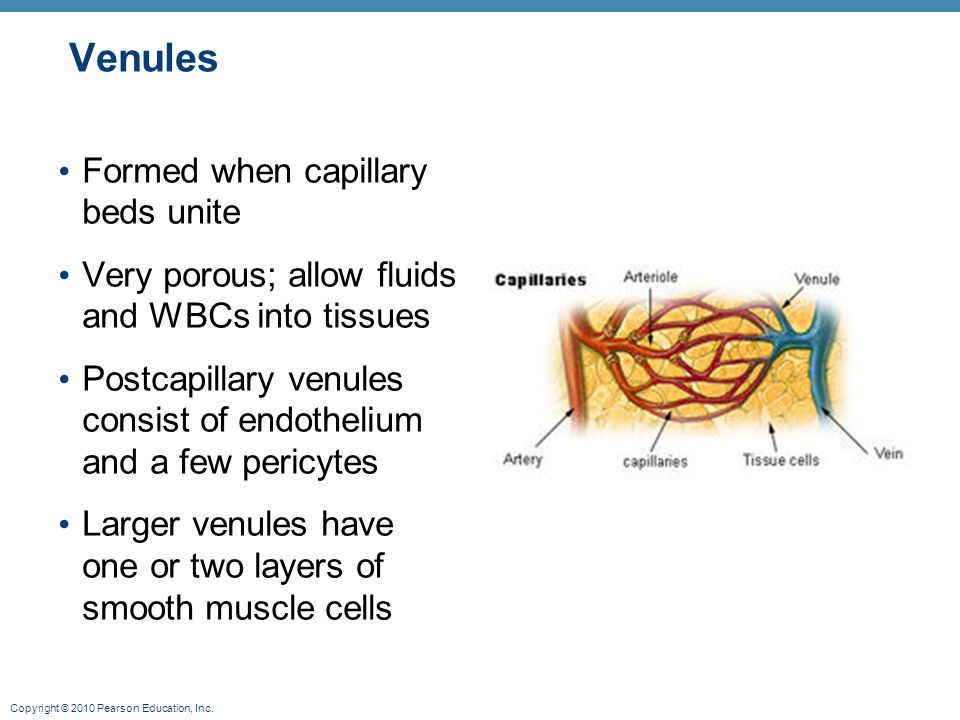 Venules Formed when capillary beds unite