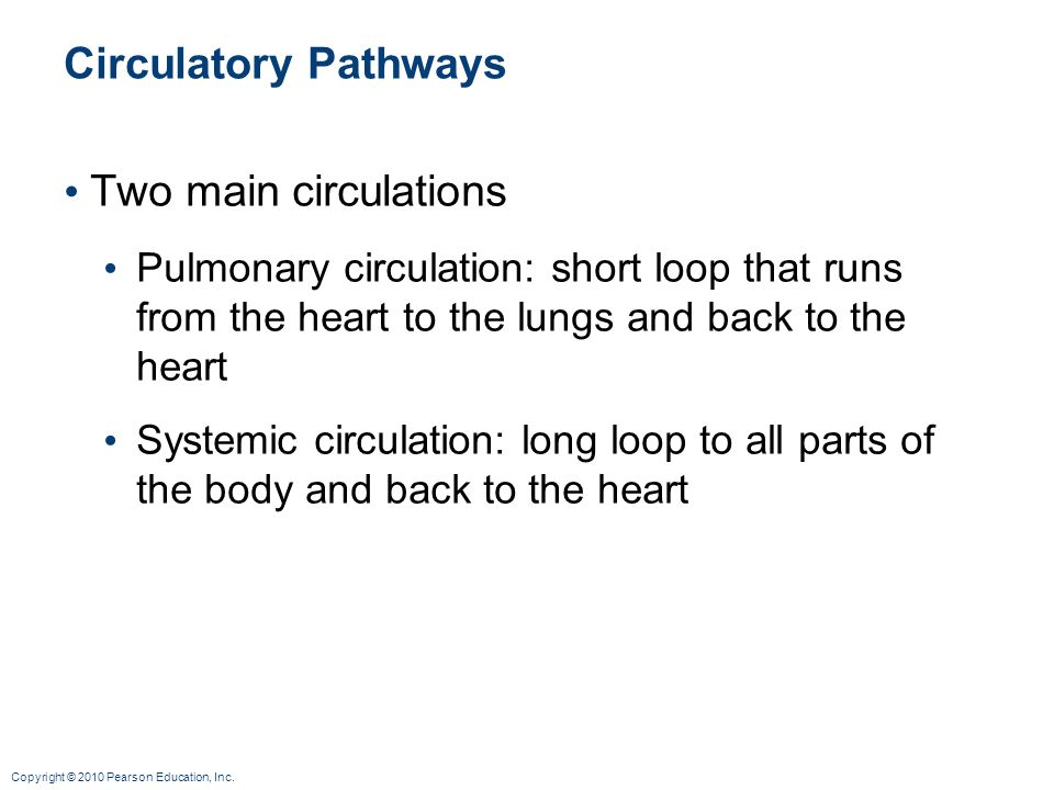 Circulatory Pathways Two main circulations
