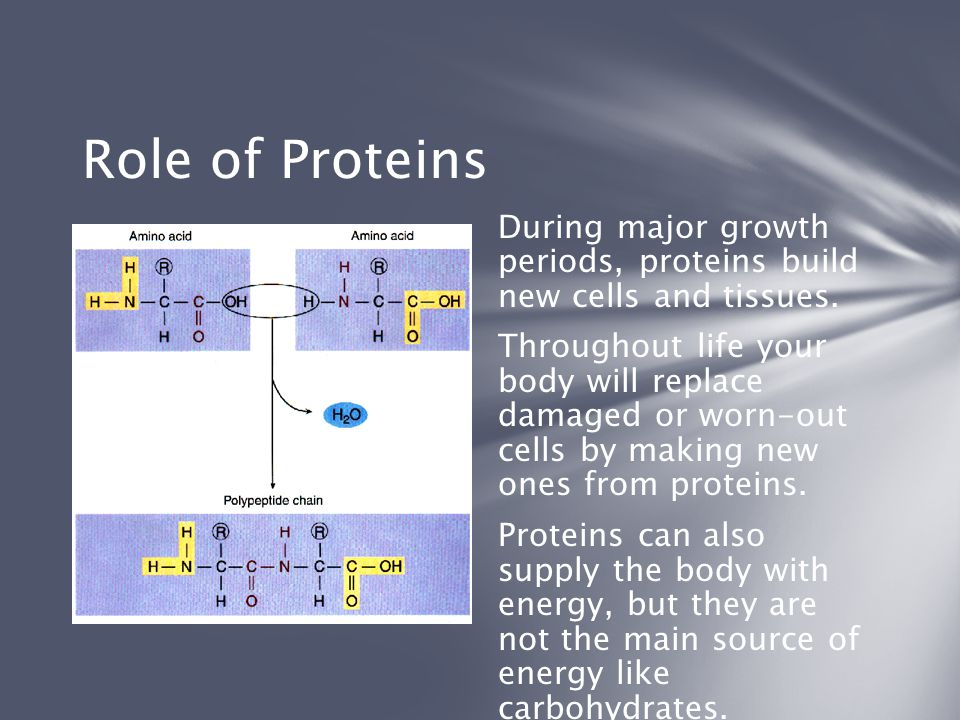 Role of Proteins During major growth periods, proteins build new cells and tissues.