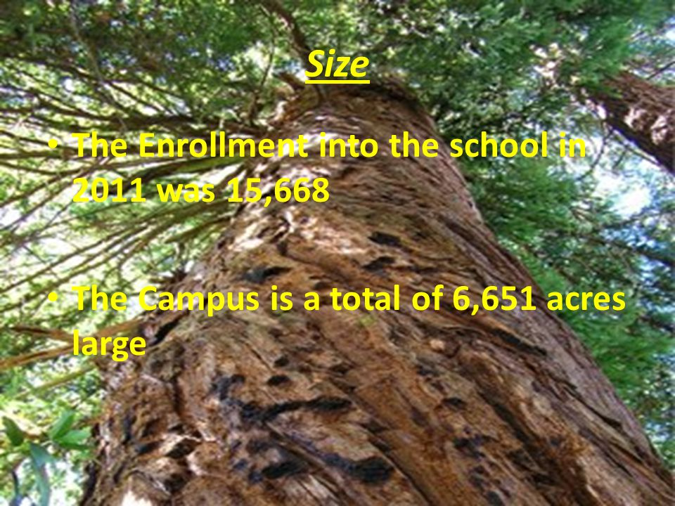 Size The Enrollment into the school in 2011 was 15,668