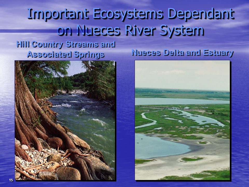 Important Ecosystems Dependant on Nueces River System