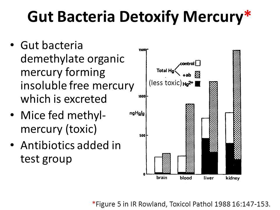 Gut Bacteria Detoxify Mercury*