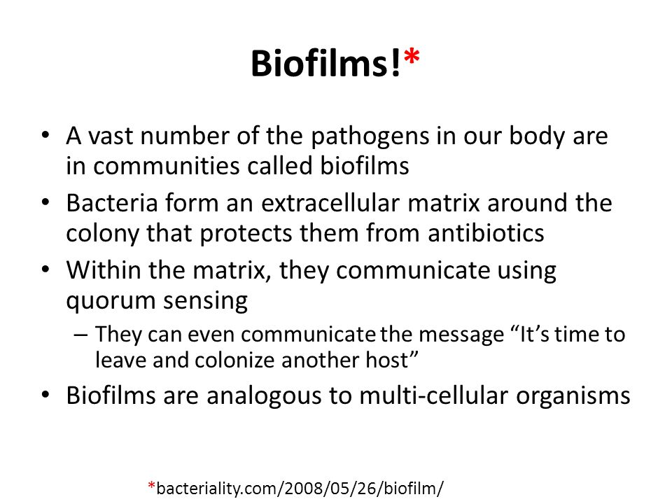 Biofilms!* A vast number of the pathogens in our body are in communities called biofilms.