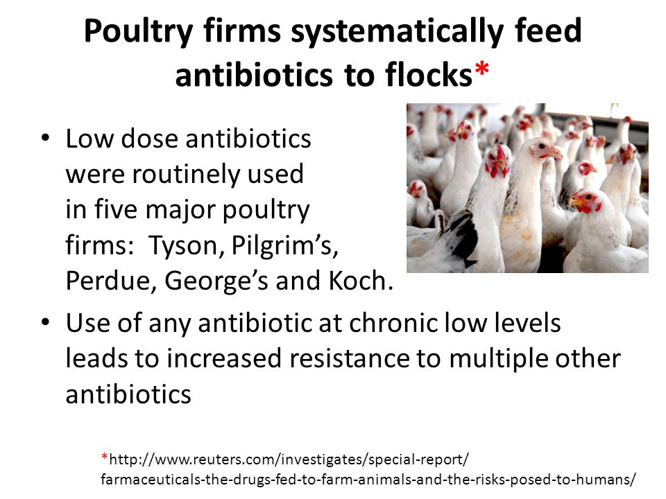 Poultry firms systematically feed antibiotics to flocks*