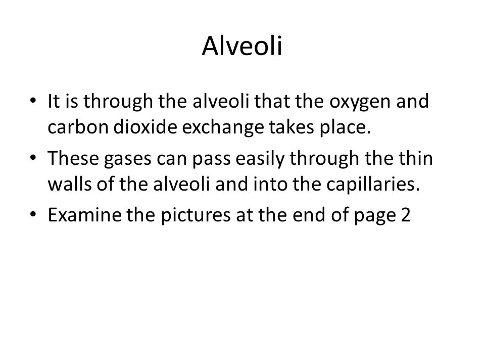 Alveoli It is through the alveoli that the oxygen and carbon dioxide exchange takes place.
