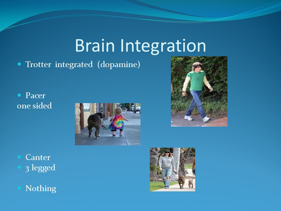 Brain Integration Trotter integrated (dopamine) Pacer one sided Canter