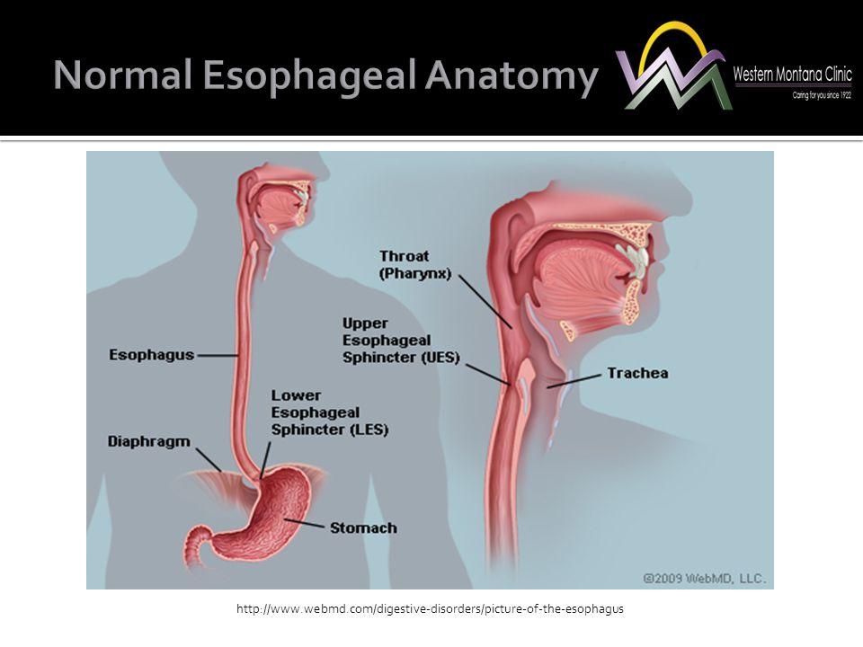 Normal Esophageal Anatomy