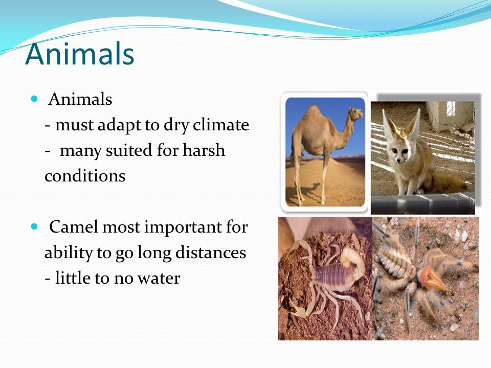Animals Animals - must adapt to dry climate - many suited for harsh