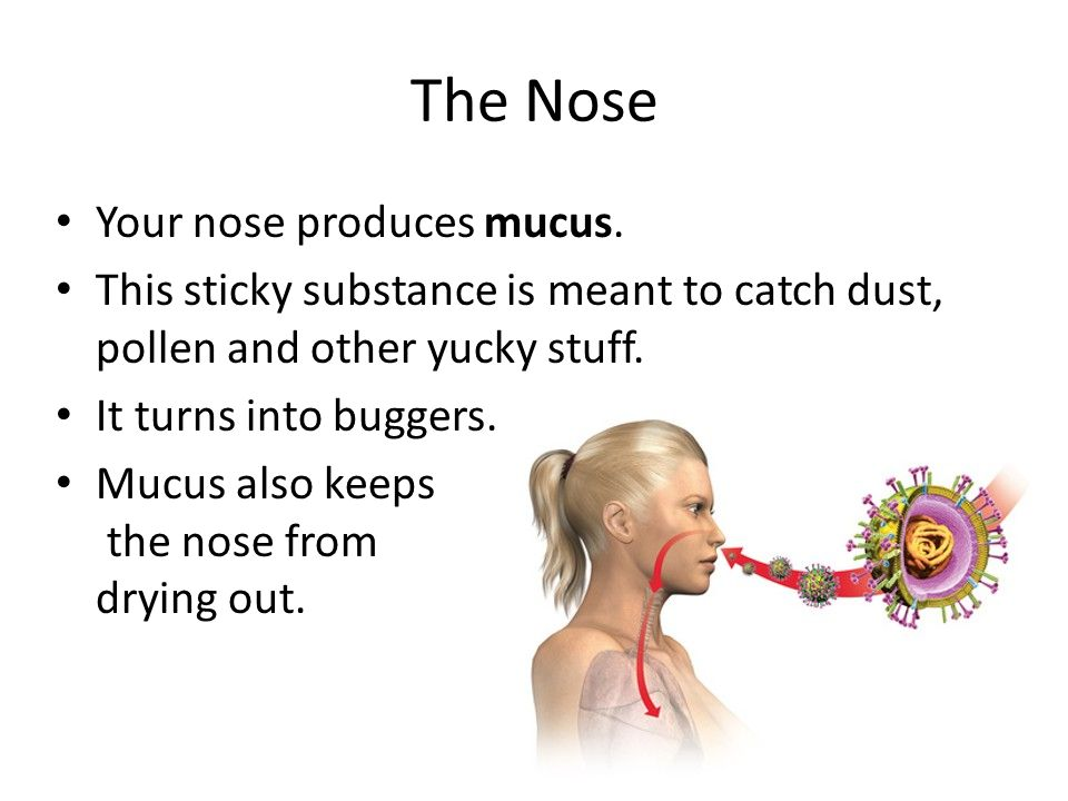 The Nose Your nose produces mucus.