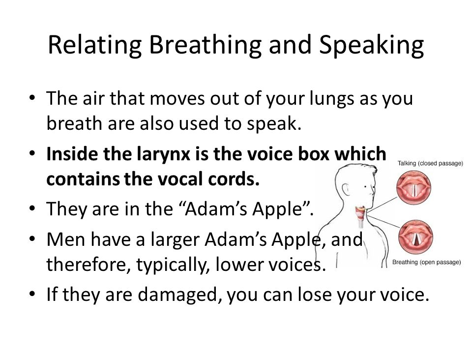 Relating Breathing and Speaking