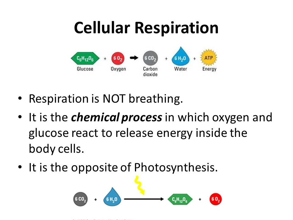 Cellular Respiration Respiration is NOT breathing.
