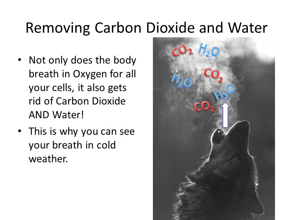 Removing Carbon Dioxide and Water