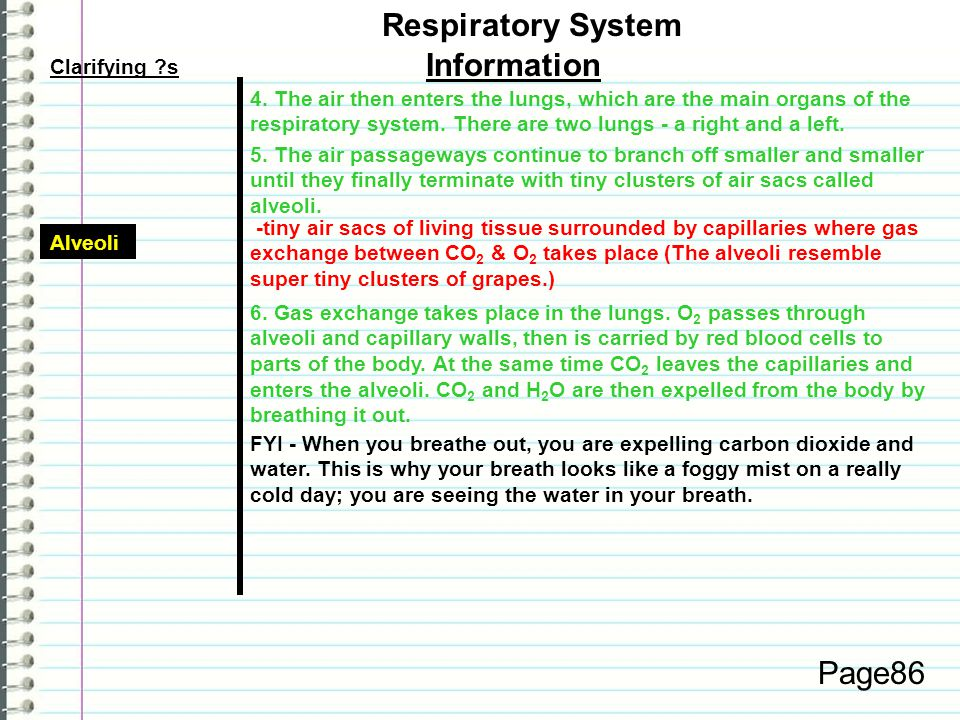 Respiratory System Information Page86 Clarifying s
