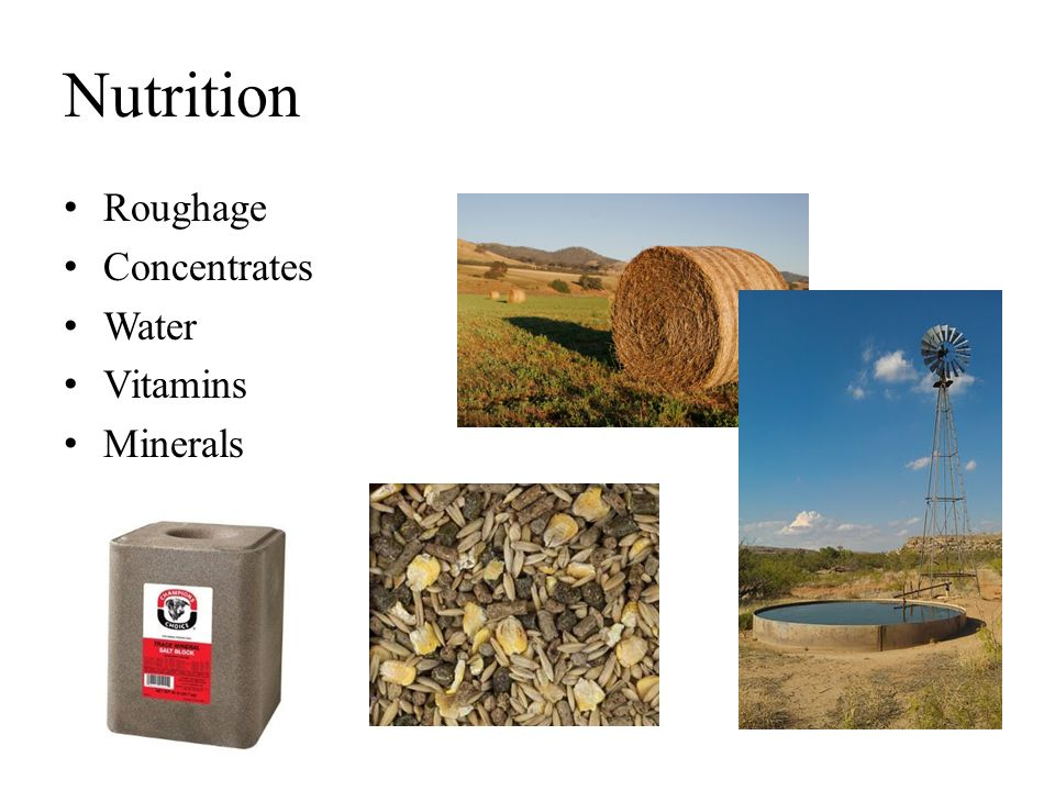 Nutrition Roughage Concentrates Water Vitamins Minerals