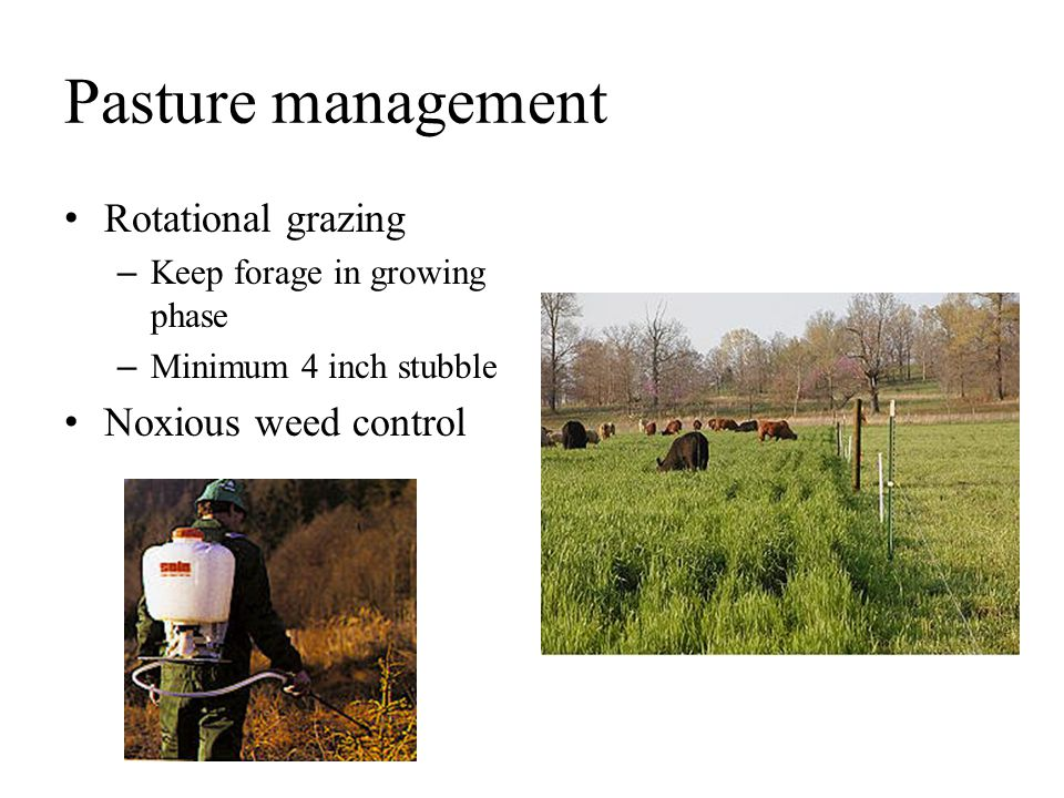Pasture management Rotational grazing Noxious weed control