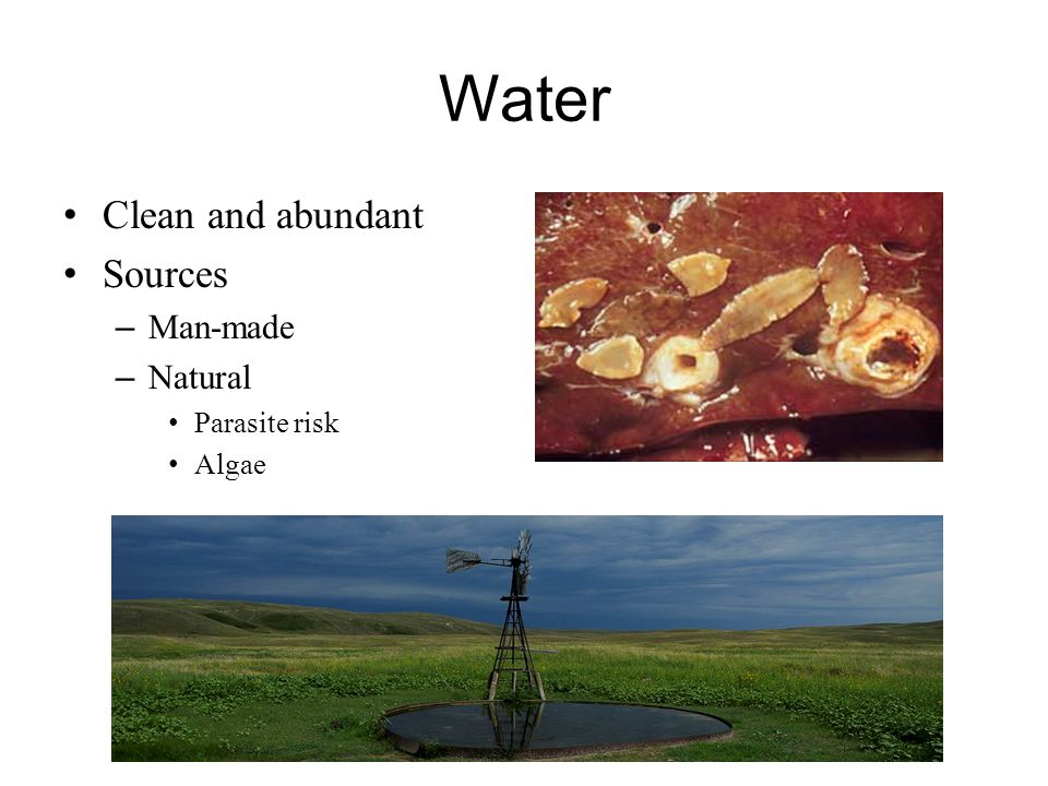 Water Clean and abundant Sources Man-made Natural Parasite risk Algae