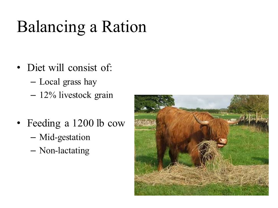 Balancing a Ration Diet will consist of: Feeding a 1200 lb cow