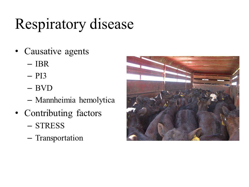 Respiratory disease Causative agents Contributing factors IBR PI3 BVD