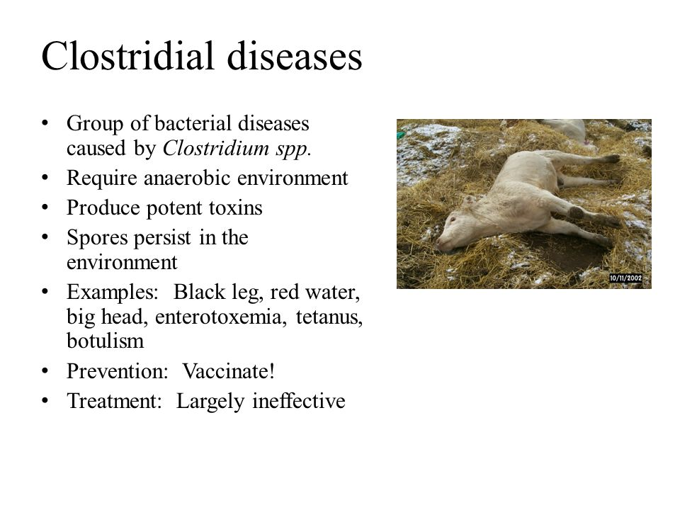 Clostridial diseases Group of bacterial diseases caused by Clostridium spp. Require anaerobic environment.