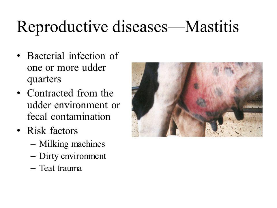 Reproductive diseases—Mastitis