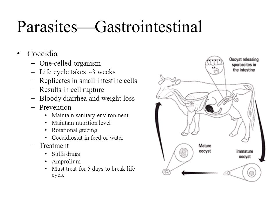 Parasites—Gastrointestinal