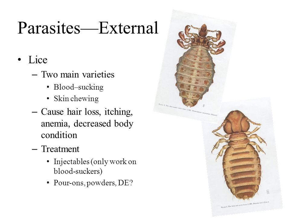 Parasites—External Lice Two main varieties