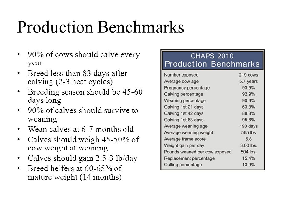 Production Benchmarks