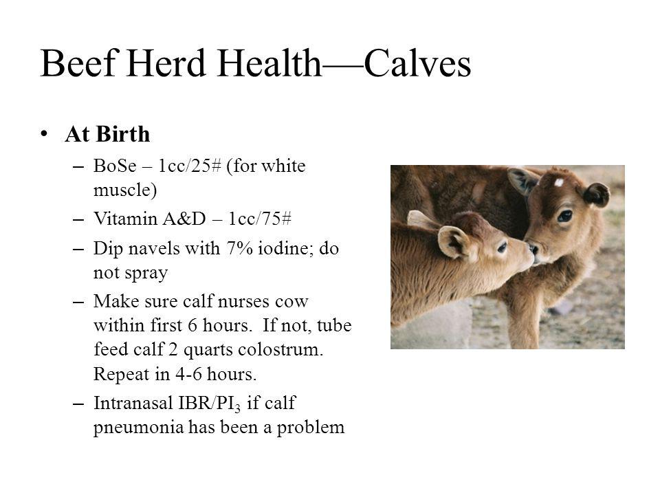 Beef Herd Health—Calves