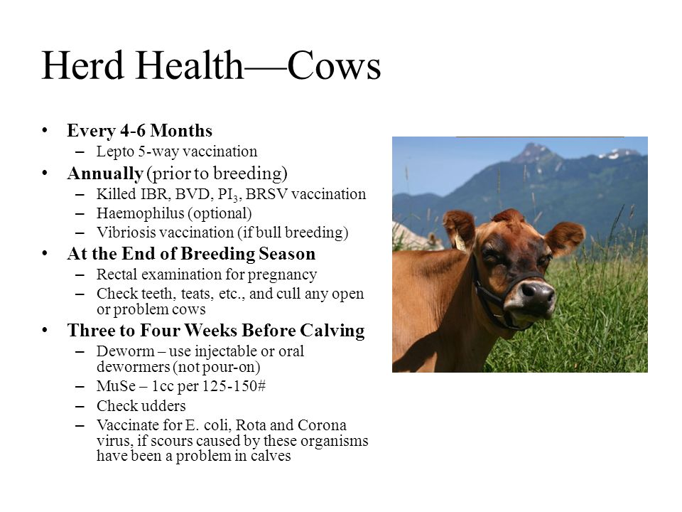 Herd Health—Cows Every 4-6 Months Annually (prior to breeding)