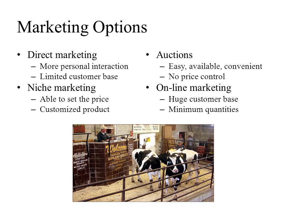 Marketing Options Direct marketing Niche marketing Auctions