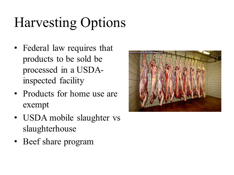 Harvesting Options Federal law requires that products to be sold be processed in a USDA-inspected facility.