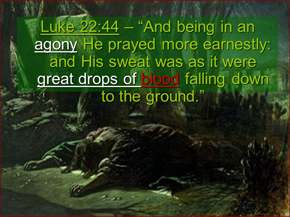Luke 22:44 – And being in an agony He prayed more earnestly: and His sweat was as it were great drops of blood falling down to the ground.