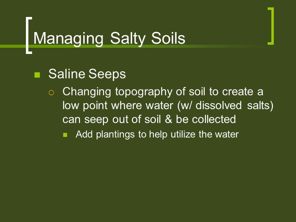 Managing Salty Soils Saline Seeps