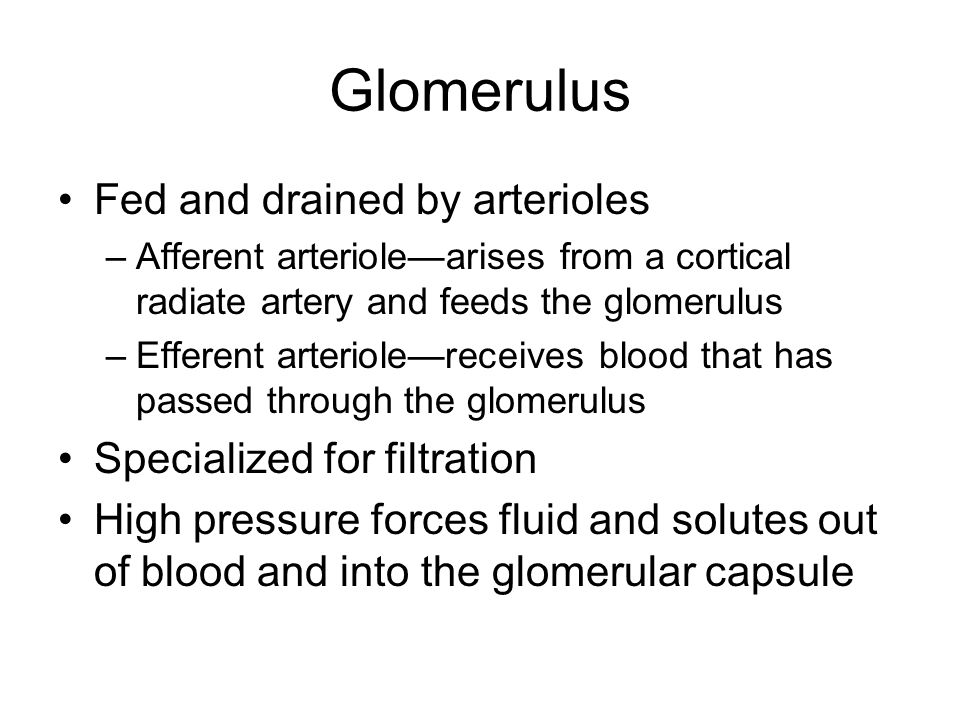 Glomerulus Fed and drained by arterioles Specialized for filtration
