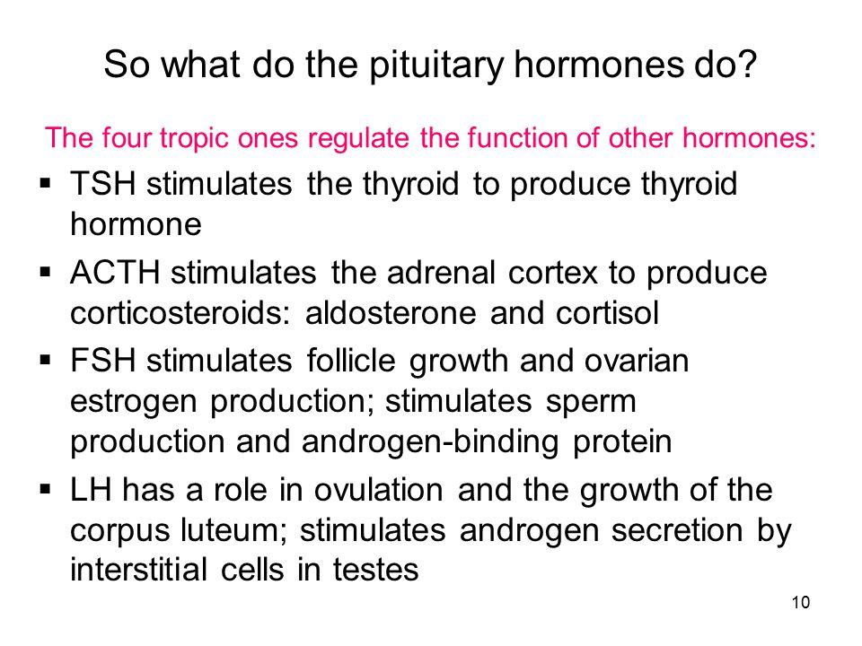 So what do the pituitary hormones do