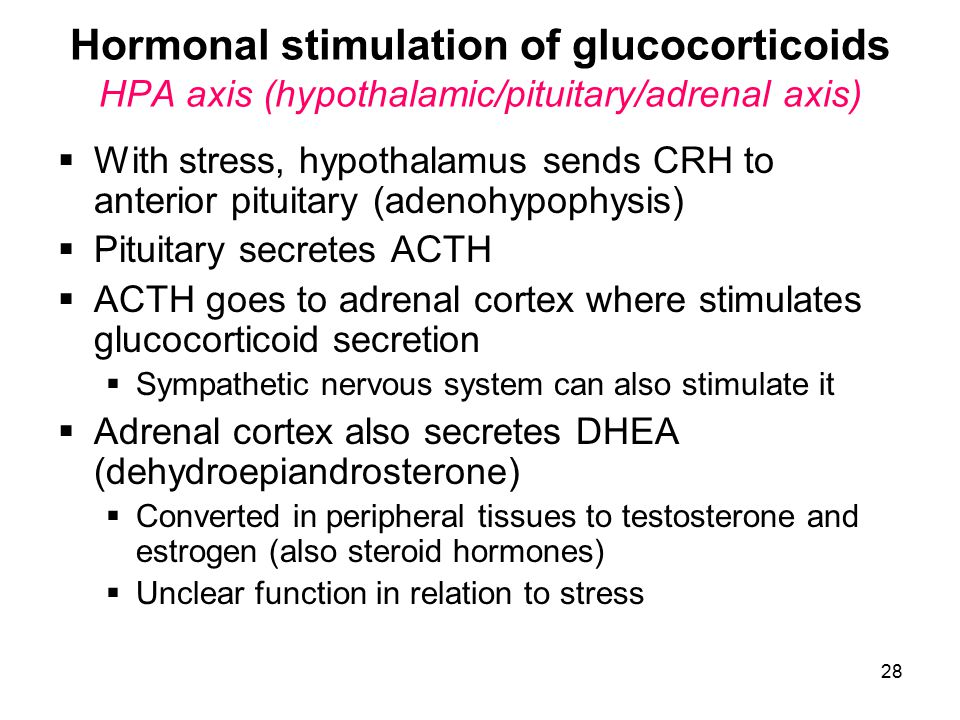 Hormonal stimulation of glucocorticoids HPA axis (hypothalamic/pituitary/adrenal axis)