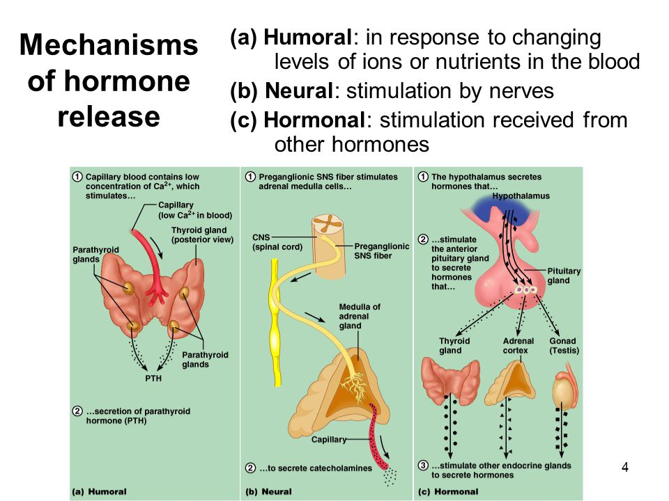 Mechanisms of hormone release