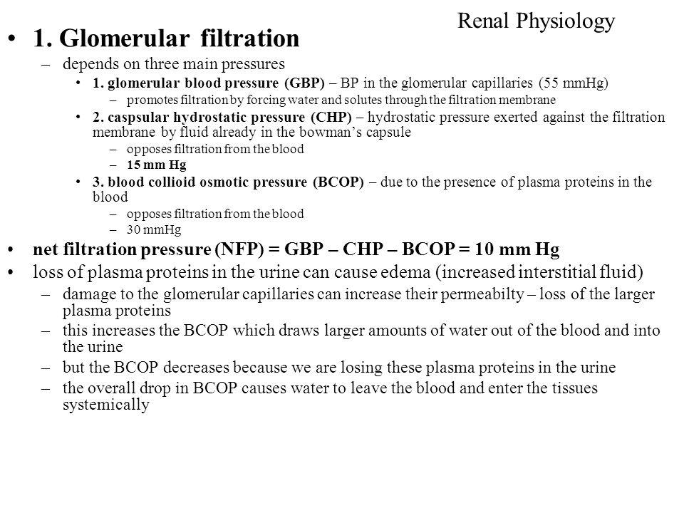1. Glomerular filtration